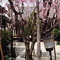 20080404_Nara