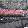 2007.2.13~14 清境農場+廬山  2日遊