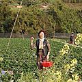0202 大湖草莓