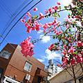 『写真旅行』 第三回  海外篇  / 沖繩放鬆 , 夏之旅