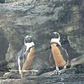 木柵動物園20120901