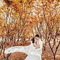 婚紗攝影景點推薦:加國之秋