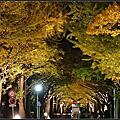 北海道大學金葉祭