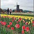 北海道上湧別鬱金香公園