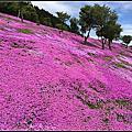 日本北海道滝上芝櫻公園