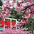 花園新城櫻花麗景