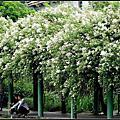 植物園野薔薇~田園的憂鬱