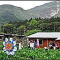 竹子湖海芋+紫藤花