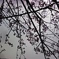 春暖花開--景色優美陽明山