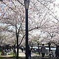 毛馬桜ノ宮公園