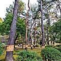 2019日本岡山鳥取之旅Part3岡山後樂園