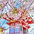 2019日本京都大阪賞櫻之旅Part1-清水寺和服變裝