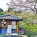 2019日本京都大阪賞櫻之旅Part2-天橋立&美山旅之行旅行團