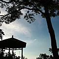 06年0729土城桐花公園