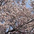 新宿御苑賞楓