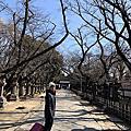 上野牡丹花
