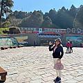 2021阿里山櫻花