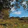 15/0110 尖石 北得拉曼神木群步道 ~那個什麼內鳥嘴山今天就算惹ㄦ~