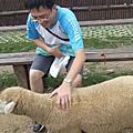 2007.7.15 清境綿羊濕背秀
