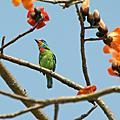鳥鳥們的鳥照片2!!