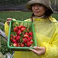 0127採草莓