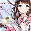 【Floris London】Cherry Blossom (御花見)