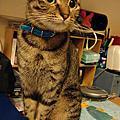 Cat milktea