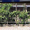 台南綠色校園