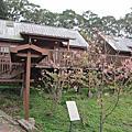 1030301竹山台大茶園