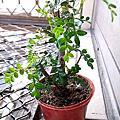2013窗台植物