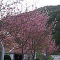 §(860 IS版)2008.02.28~03.01宜蘭+太平山+武陵農場--第二、三天§