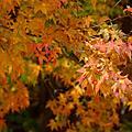 【2008.11.21~23】第三天:福壽山