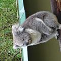 2009.10.9~19 墨爾本之旅
