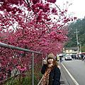 20120225_台中后里賞櫻之旅