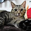 超Q貓咪家族_☺