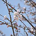20120402 日本關西第三天