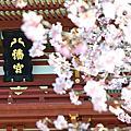 2011/03/10 伊豆河津櫻花祭