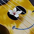 表演。2012客家桐花祭