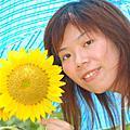 14827183迎著陽光的向日葵200706