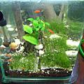 魚缸at home