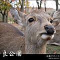 楓情.奈良東大寺/奈良公園