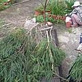 打造花園紀錄