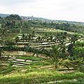 世界遺產-加迪魯威梯田