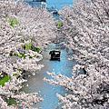 2019 京都 ( 哲學之道 . 十石舟 )