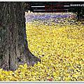 2013.12.06 京都自由行 D2