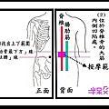 腎俞穴(屬「膀胱經」)