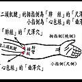 尺澤穴(屬「肺經」)