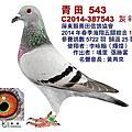 103年春季入賞鴿照
