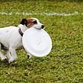 2014飛盤狗大賽