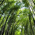 2014京阪奈-嵐山
